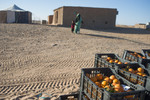 A distribution of oranges by Oxfam in the camp of Bujdur.